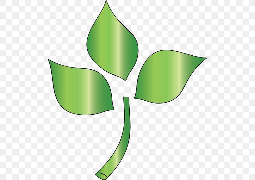 Leaf Tree Branch Plant Stem Clip Art, PNG, 512x579px, Leaf, Artwork, Branch, Christmas Tree, Flora Download Free