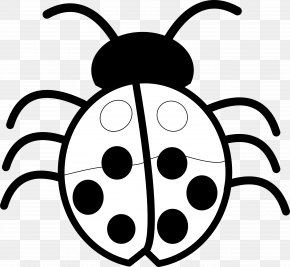 Free Black And White Graphics - Beetle Free Content Black And White Clip Art PNG