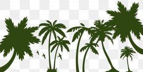 Tree - Arecaceae Sago Palm Tree PNG