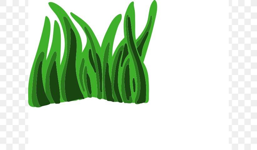 rumput animasi gambar sketsa rumput animasi gambar sketsa