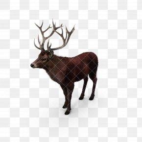Deer,deer,animal,Fawn - Reindeer Elk Red Deer Moose PNG