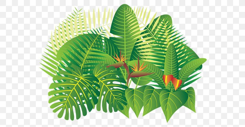 Tropical Rainforest Tropics Plant Png 600x427px Tropical Rainforest Banana Leaf Flower Flowerpot Leaf Download Free The forest floor is littered with leaves and decaying vegetation. tropical rainforest tropics plant png