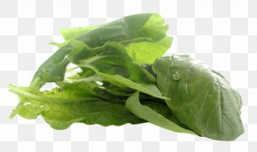 Spinach - Juice Spinach Romaine Lettuce Vegetarian Cuisine Food PNG