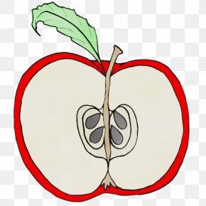 Plant Stem Tree - Leaf Clip Art Plant Apple Fruit PNG