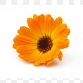 Autumn-flowers - Marigolds English Marigold Medicinal Plants Mexican Marigold Flower PNG