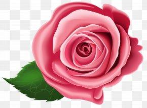Rose Transparent Clip Art - Clip Art PNG
