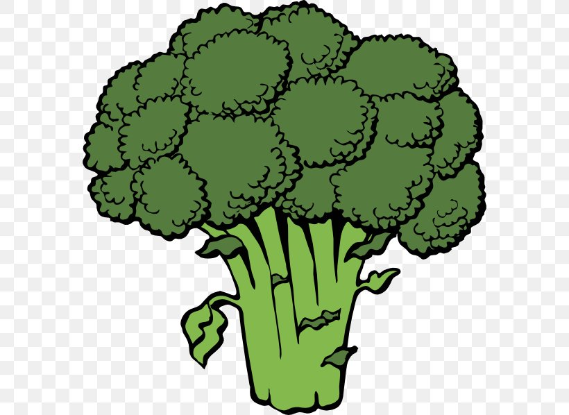 Broccoli Vegetable Clip Art, PNG, 582x598px, Broccoli, Cabbage, Cauliflower, Celery, Cooking Download Free