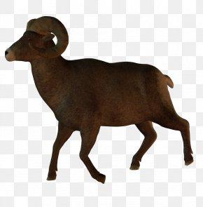 Animals - Australian Kelpie Australianlammaskoira Goat Animal PNG