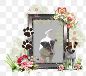 Puppy - Dog Breed Jack Russell Terrier Puppy Picture Frames Companion Dog PNG