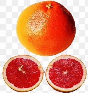 Mandarin Orange Food - Orange PNG