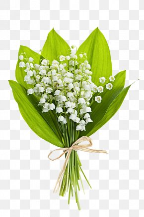 White Flower Bouquet - Lily Of The Valley Flower Bouquet Stock Photography Clip Art PNG