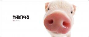 Pig - Pig Farming Pig Farming Clip Art PNG