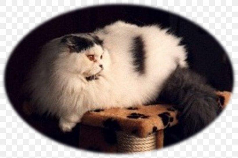 Whiskers Norwegian Forest Cat Kitten Siberian Cat Fur, PNG, 1116x743px, Whiskers, Carnivoran, Cat, Cat Like Mammal, Fur Download Free