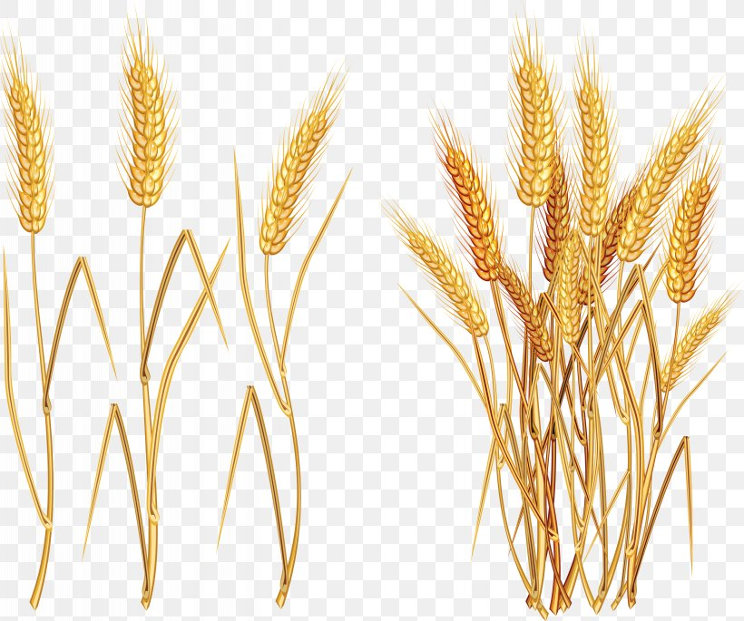 Wheat Euclidean Vector Clip Art, PNG, 5733x4795px, Common Wheat, Agriculture, Cereal, Cereal Germ, Commodity Download Free