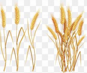 Wheat - Wheat Euclidean Vector Clip Art PNG