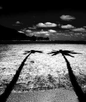 Black And White Coconut Tree Reflection - Black And White Coconut Photography PNG