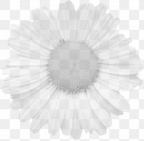 Flower - Graphics Flower Stock.xchng Pixabay Petal PNG