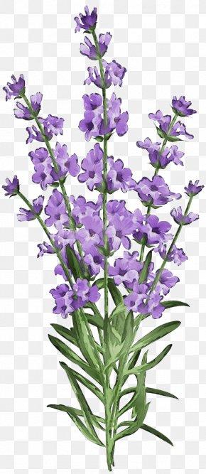 French Lavender Violet Family - Lavender PNG