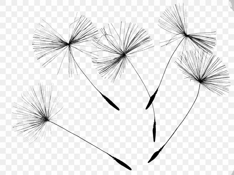 Common Dandelion Drawing Flower Seed, PNG, 1200x900px, Calendar, Black And White, Book, Book Cover, Diary Download Free