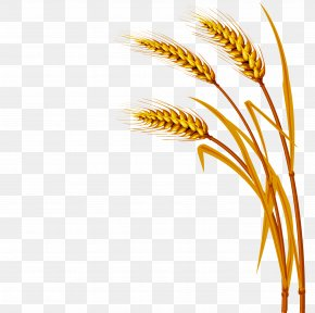 Wheat - Wheat Royalty-free Clip Art PNG