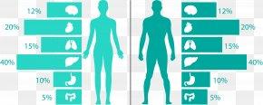 Vector Human Health Information Map - Euclidean Vector Human Body Information Health PNG