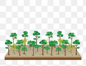 Tree - Tree Agroforestry Graphic Design Apuntes De Clase Del Curso Corto: Sistemas Agroforestales PNG