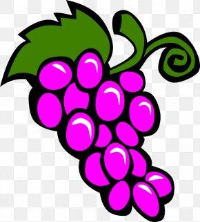 Grapes Drawing - Fruit Salad Grape Clip Art PNG