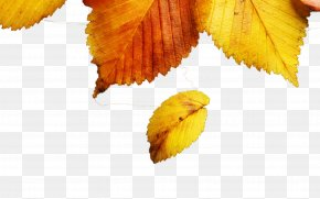 Yellow Autumn Leaves - Leaf Autumn Yellow Wallpaper PNG