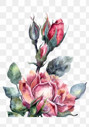 Watercolor Red Peony Flowers - Watercolor Painting Illustrator Illustration PNG