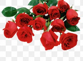 Valentine's Day - Valentine's Day Desktop Wallpaper Rose PNG