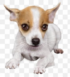 Puppy - Chihuahua Puppy Dog Breed Toy Fox Terrier Miniature Fox Terrier PNG