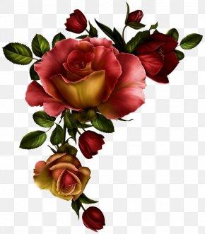 Rose - Borders And Frames Rose Flower Clip Art Floral Design PNG