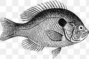 Common Carp Drawing Image Download Stock.xchng PNG