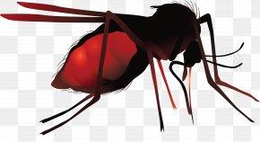 Mosquito - Mosquito Net Zika Virus Hematophagy PNG