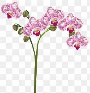 Orchid Transparent Clip Art Image - Orchids Flower Clip Art PNG