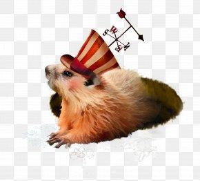 Groundhog - Punxsutawney Phil Whiskers Groundhog Magazine PNG