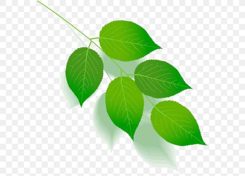 Green Leaf Color Tree Plant Stem, PNG, 571x588px, Green, Branch, Color, Flower, Leaf Download Free