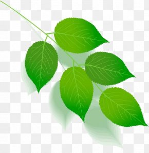 Leaf - Green Leaf Color Tree Plant Stem PNG