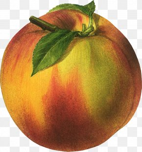 Peach Image - Nectarine Organic Food Fruit Poster Peach PNG