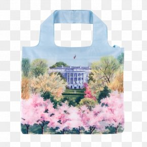 Cherry Blossom Watercolor - White House Historical Association Tidal Basin Cherry Blossom First Lady Of The United States PNG