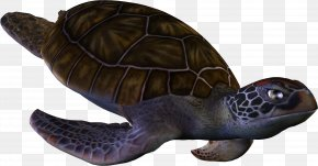 Turtle Pictures - Loggerhead Sea Turtle Box Turtle PNG