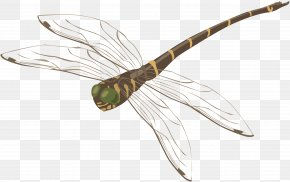 Dragonfly - Dragonfly Web Browser Computer File PNG