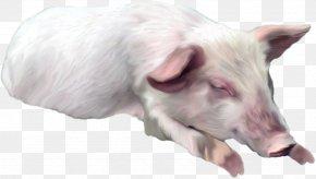 Pig - Domestic Pig Horse Dog Clip Art PNG