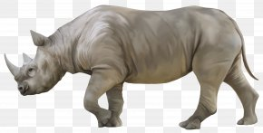 Rhino - Rhinoceros 3D Rendering PNG