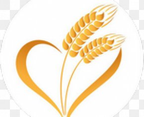 Wheat - Wheat Caryopsis Ear Cereal Food Grain PNG