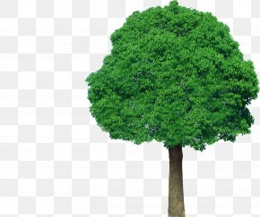 Tree Top View - Tree Green Plant Clip Art PNG