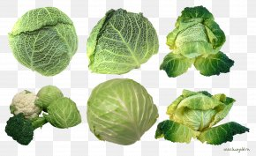 Mangosteen - Savoy Cabbage Vegetable Brussels Sprout Collard Greens PNG