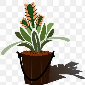 Planting Flowers - Aechmea Vector Graphics Clip Art Tillandsia Flowering Plant PNG