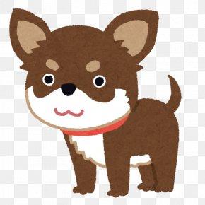 Chihuahua Dog - Chihuahua Dachshund Shiba Inu Italian Greyhound Luxating Patella PNG