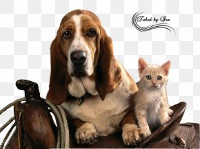Dogs And Cats - Basset Hound Puppy High-definition Television Wallpaper PNG